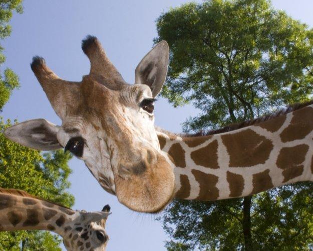 Aalborg Zoo rabat ung rør