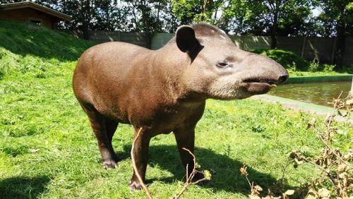 dagens ordsprog København zoo rabat